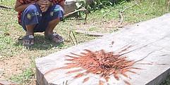 Ein Baumstamm voller Blut. Im Hintergrund sitzt Kind in der Hocke, der Oberkörper ist nicht im Bild.