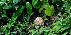 Eine Submunition liegt im Gebüsch.